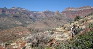 Grand Canyon Nankoweap Trail