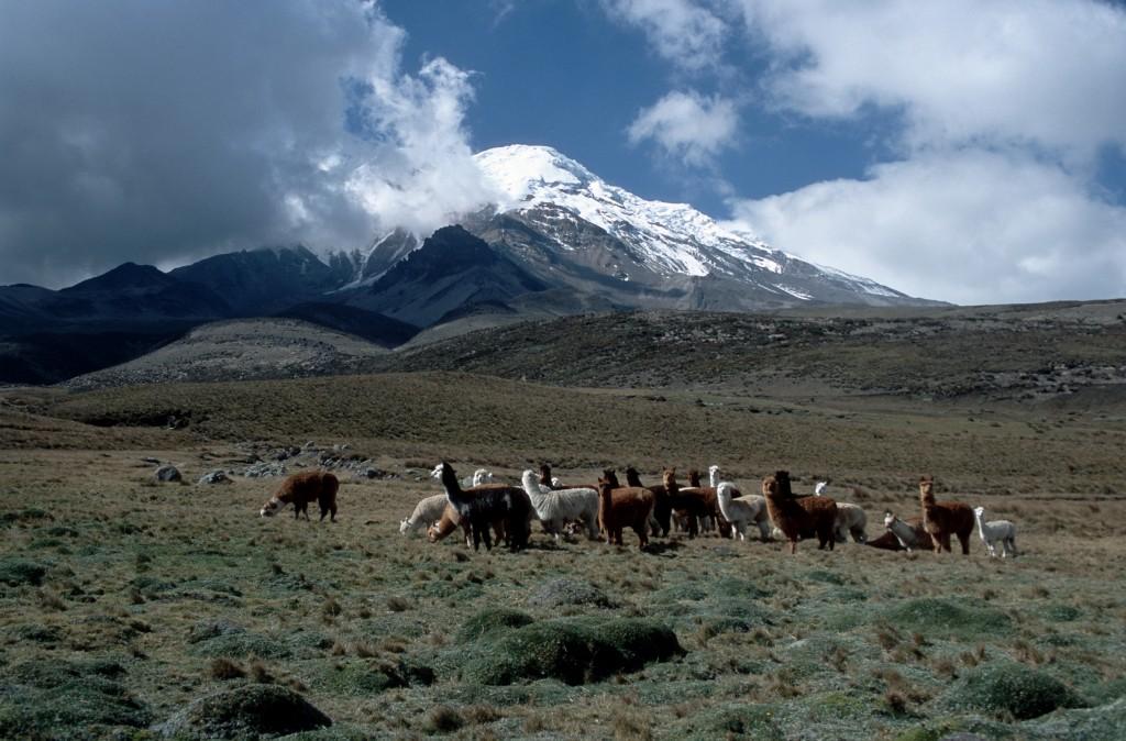 Chimborazo Cotopaxi Volcano and Valley of the Volcanoes in Ecuador