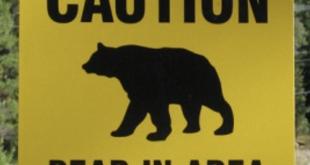 Caution bear area